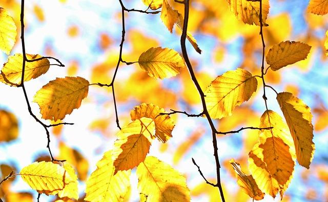 Fall Foliage Autumn October Leaves Colorful